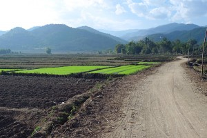 Fields outside of Kengtung